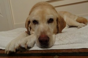 Daisy Mansfield, April 2012, Dog's End of Life