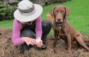 gardening with Willow