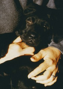 Ring on the hand that held puppy Leo, 1995