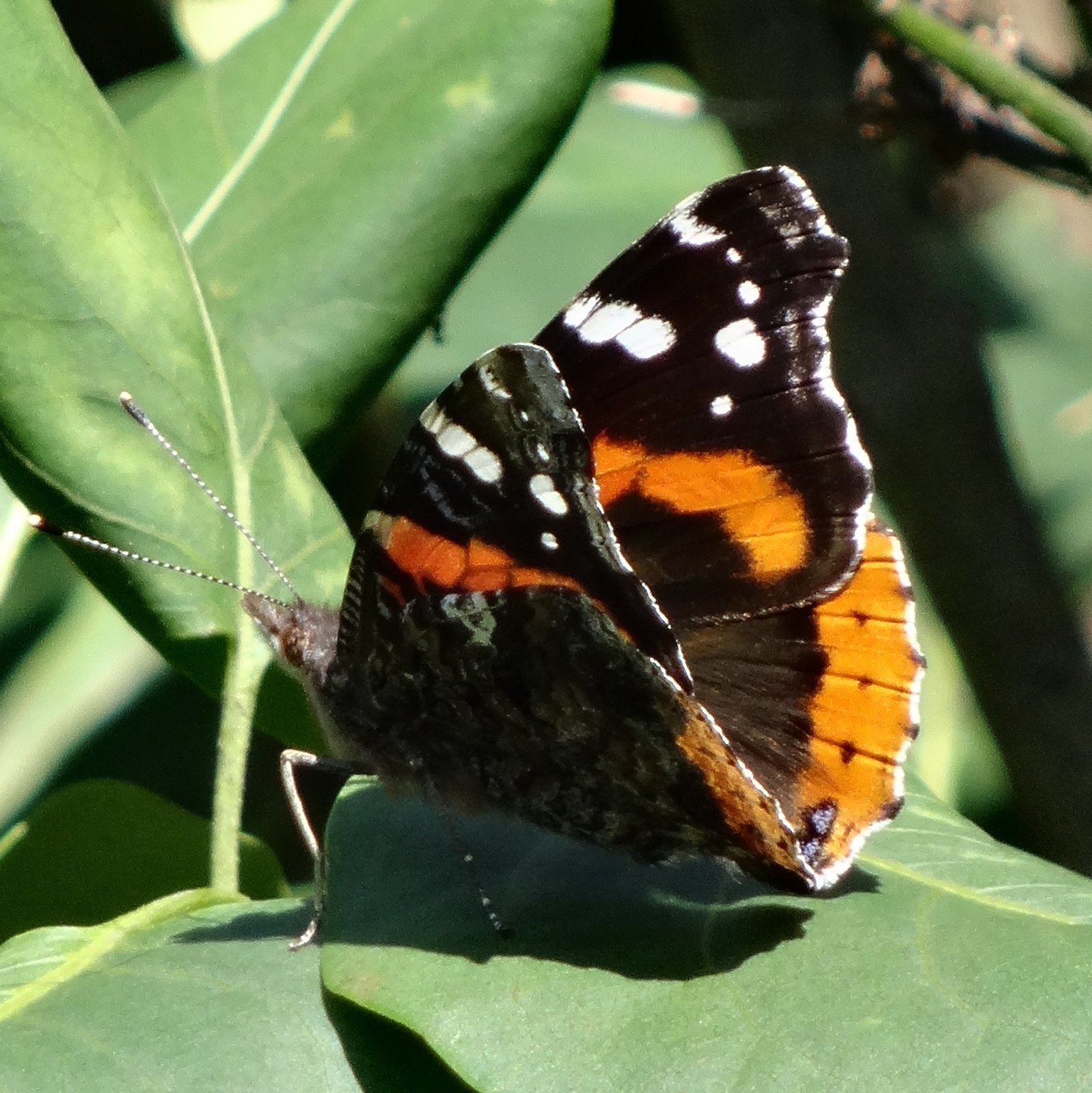 Bees, Butterflies, And Blessings: Cycles Of Nature And