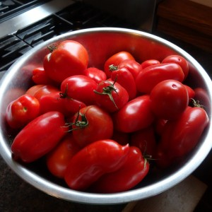 Tomatoes headed for the freezer